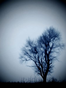 the-lonely-tree-in-flux